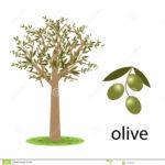 di-olivo-17022698